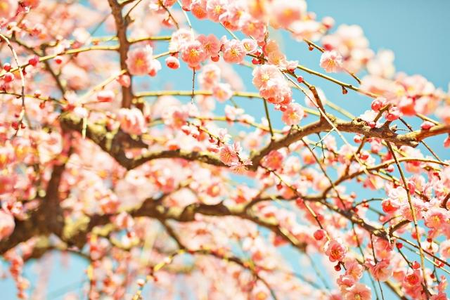 【変形性股関節症と正しく向き合うために】春は生活を見直す最高のチャンスです!